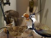Muséum d'Histoire Naturelle Rochelle