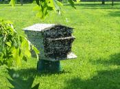 Pour sauvez abeilles, signez pétition