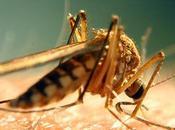 dengue guangdong