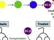 DIABÈTE type produisent bêta partir cellules souches Cell