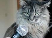 Kittybox: votre avis, Nounoune?