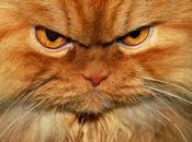 Garfy chat plus grincheux Monde