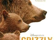 Grizzly, piège l'anthropomorphisme