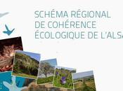 Région Alsace approuve Schéma Régional Cohérence Ecologique (SRCE)