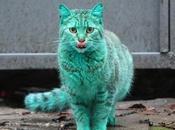 chat vert Varna (Bulgarie)