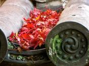 Pluie feuilles rouges Nara Kyoto