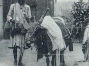 1900, Pondichéry, boeuf savant. petit bout France Inde...