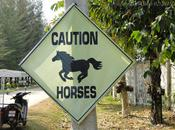 chevaux d'Udon-Thani