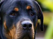 chien sauve femme enceinte agresseurs
