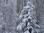 hiver, protégeons plantes