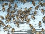 L'Assemblée nationale vote l'interdiction néonicotinoïdes toxiques pour abeilles