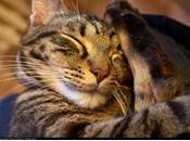 Nouvelle recherche scientifique: Perdre minutes sommeil nuit suffisant pour faire engraisser affecter métabolisme