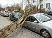 Tempête Munich: arbres déracinés, voitures défoncées