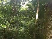 Actualité visitez Machu Picchu l'Amazonie grâce Google Street View!