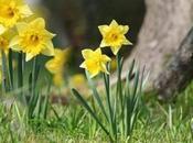 Ballade printemps dans bois saison jonquilles réglementation Mons- Borinage