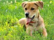 Tractive Traking traceur pour retrouver chien