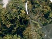 grand-mère arrêtée pour avoir vendu cannabis