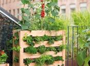 Shopping pour créer jardin gourmand balcon