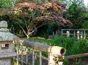 jardin japonais associant l'eau, végétal pierre