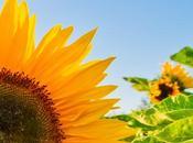 L'autonomie guérisons plexus solaire