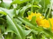 plantes amincissantes connaître