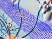 ÉPILEPSIE: thérapie cellules souches pour rétablir neurogenèse Cell Stem