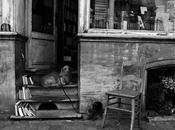 chien libraire Bruxelles