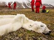 lions victimes réchauffement climatique
