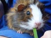 AUTISME: compagnie d'un animal pour soulager l'anxiété Developmental Psychobiology