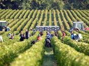 Vins Bordeaux réchauffement: CIVB pour l'introduction cépages étrangers