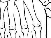 2ème point méridien l'intestin grêle (2IG)