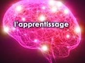 Parlez-vous mêmes langages votre cerveau