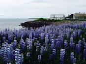 Carnet voyage l'Islande