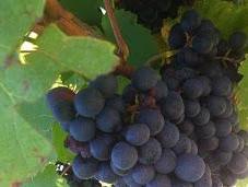 Cave Saint-Verny, vins d'Auvergne expriment leur potentiel #AOC Côtes