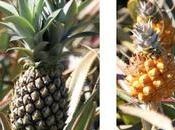 Ananas recettes