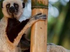 portrait animalier route pour Madagascar