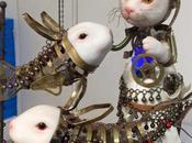 Chimeric creations Midori Hayashi