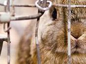 Faire oublier l'élevage intensif consommateurs