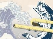 OBÉSITÉ: L'huile poisson réveille métabolisme graisses Scientific Reports