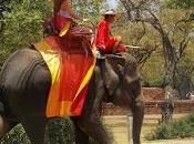 propos Éléphants... l'on cache touristes
