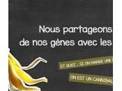 L'ADN d'une banane