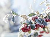 'Conseils Jardin Françoise' pour protéger plantes durant l'hiver