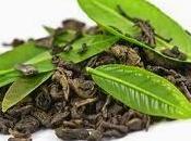 bienfaits vert (Camellia sinensis)