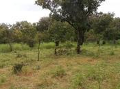 Enquête investissements groupe Bolloré dans plantations africaines