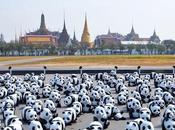 Bangkok 1600 Pandas: silence expose