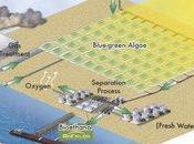 mieux algues