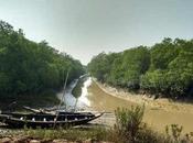 Parc National Bhitarkanika Orissa