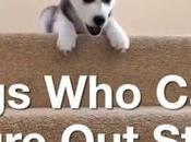 chien escaliers