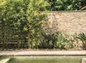 [Interview] Découvrez Piscine miroir Leader* piscines écologiques