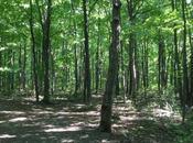 Dans forêt d'Anjou